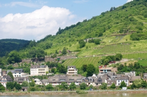 Rhine-10