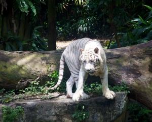 Zoo-392