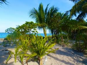Beach-Path-_1_