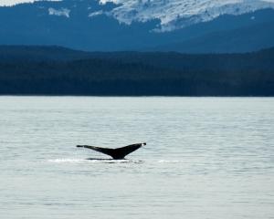 Alaska-945_3