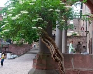Heidelberg-6
