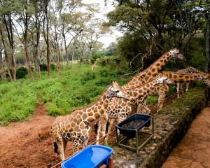 Africa-2018-Nairobi15
