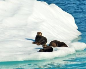 Sea-Otters_001