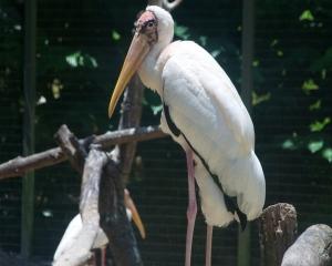 Bird-369