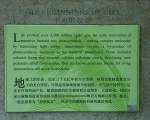 Botanical-329