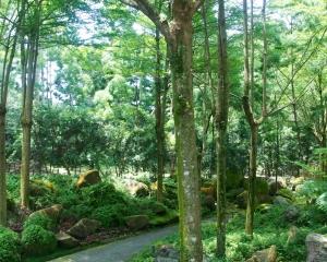 Botanical-330