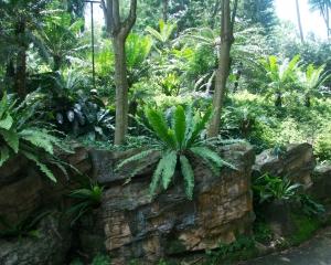 Botanical-331