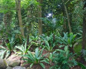 Botanical-336