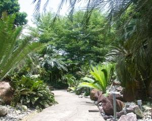 Botanical-337