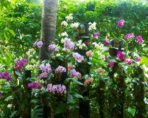 Orchid-254