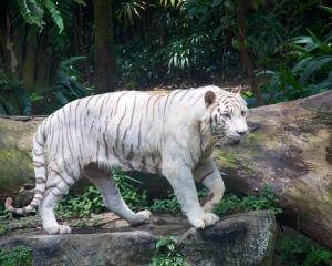Zoo-394